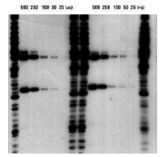 Pore Size 0.2 /µm Pall 60113 Biodyne A Membrane 30 cm x 3 m roll